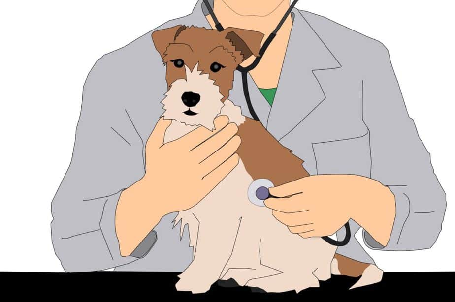 BarxBuddy Announces that a New In-House Veterinarian Has Been Added to the Team